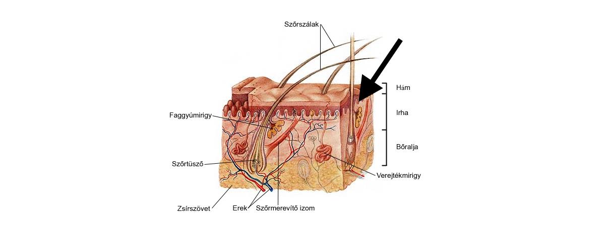 bor-szerkezete